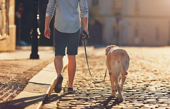 comment rafraîchir un chien conseils promenade