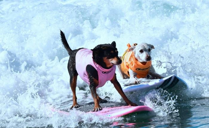 comment rafraîchir un chien conseils