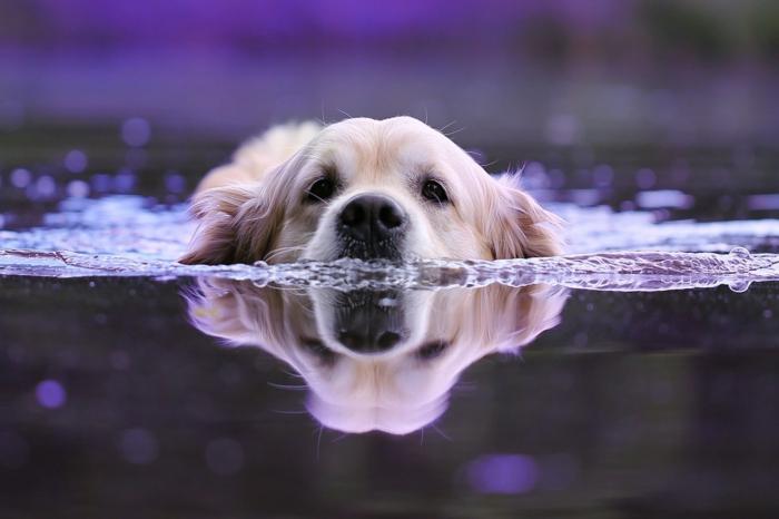 conseils comment rafraîchir un chien