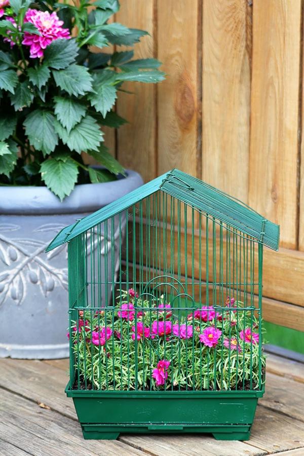 déco cage oiseau avec des fleurs vivantes jardin