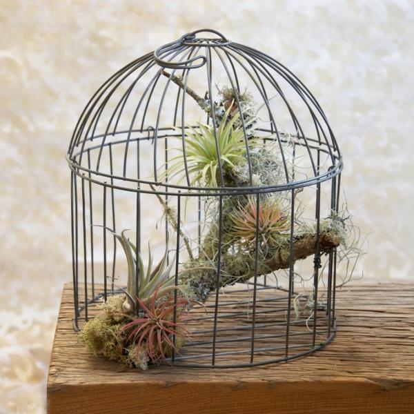 déco cage oiseau plantes désertiques