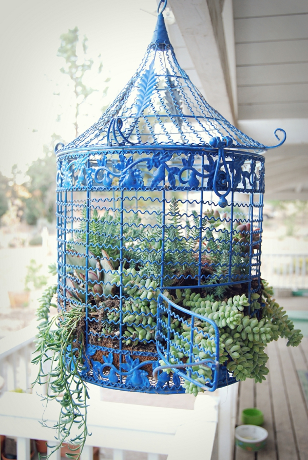 déco cage oiseau terrasse jardinières de succulentes