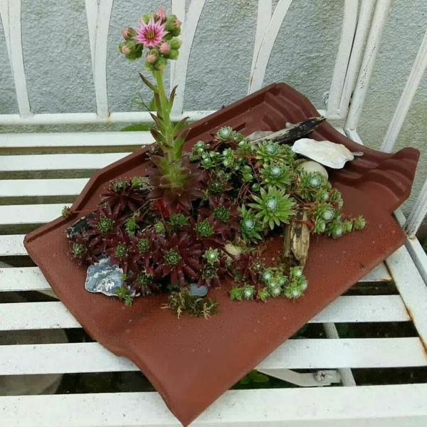 fabriquer déco jardin en tuiles de terre cuite mini jardin de succulentes diy