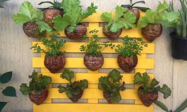 jardinière suspendue à fabriquer soi-même noix de coco