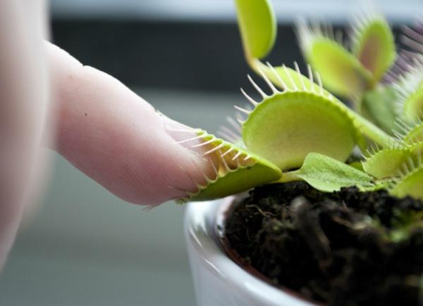 méthodes naturelles de chasser les mouches plante dionée