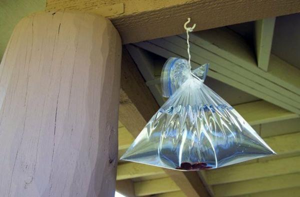 méthodes naturelles de chasser les mouches sacs en plastique pleins d'eau