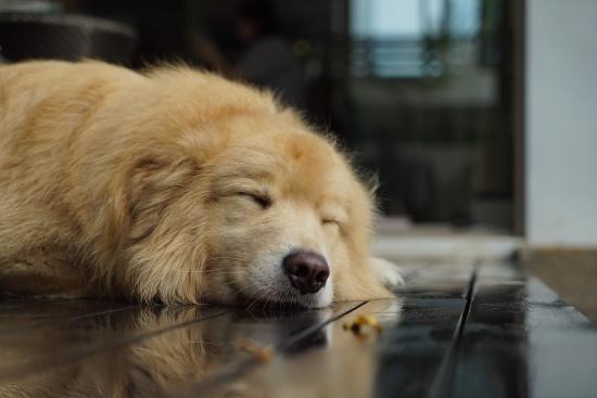 mauvaise odeur maison animal de compagnie