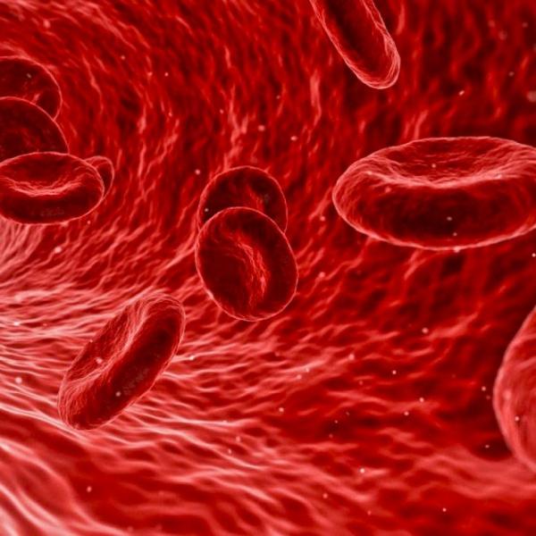 quel aliment pour déboucher les artères flux sanguin