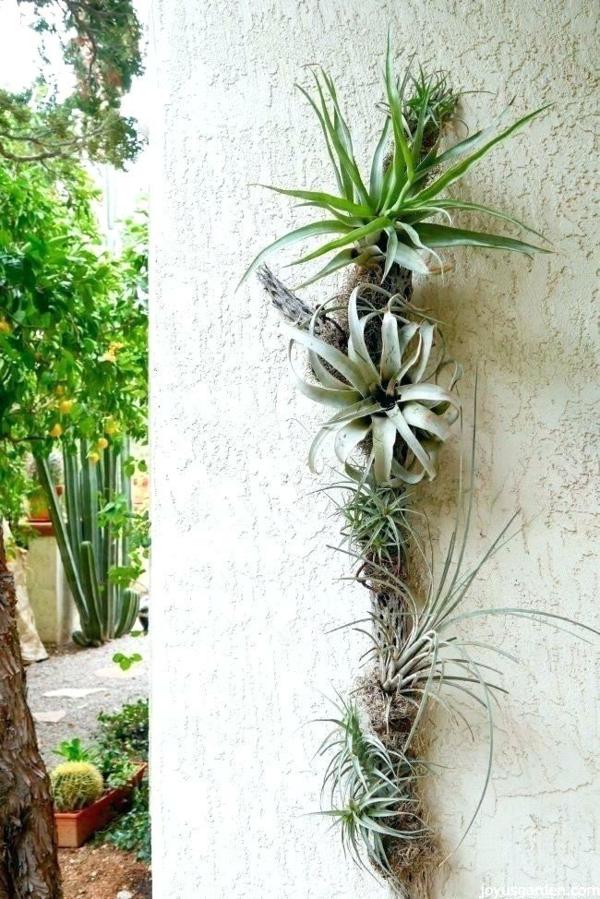 Tillandsia déco extérieure mur de jardin