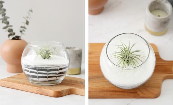 Tillandsia diy terrarium sable blanc
