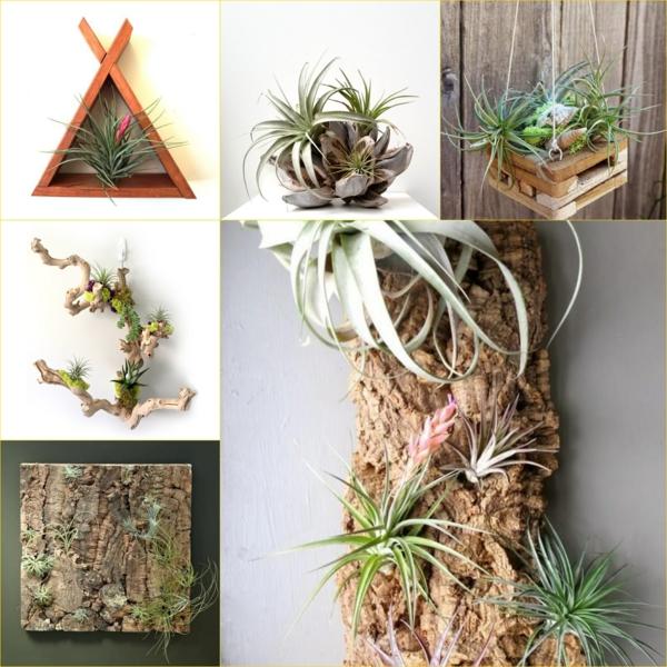 Tillandsia plante sans terre support en bois