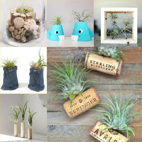 Tillandsia plantes supports créatifs