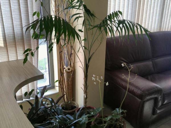 arrangement bureau des pots de plantes