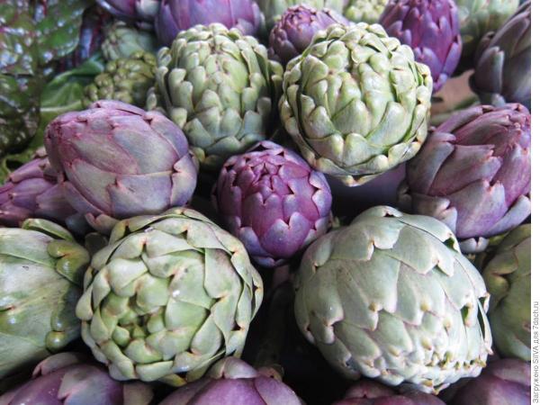 artichauts en couleur violette