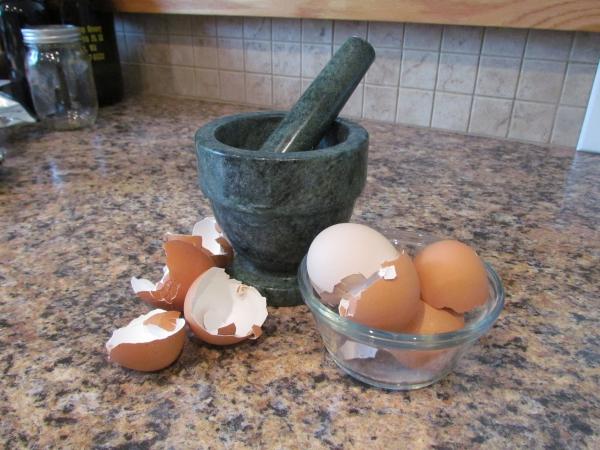 coquillage des oeufs ne pas jeter