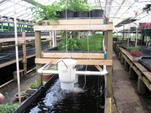 culture aquaponique à étages