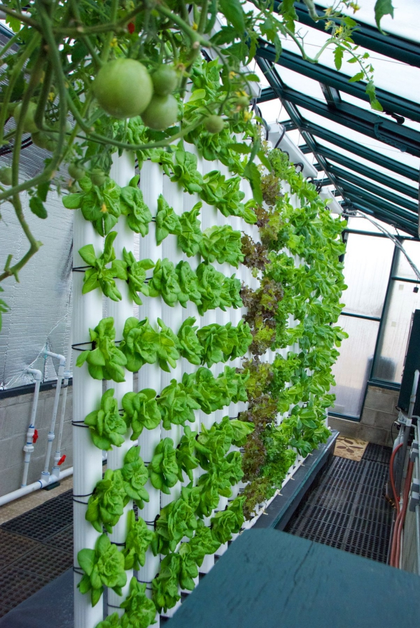 culture aquaponique construction verticale