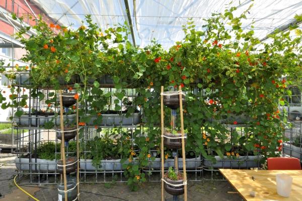 culture aquaponique cultiver des fleurs