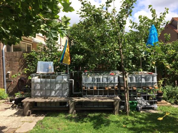 culture aquaponique dans la cour