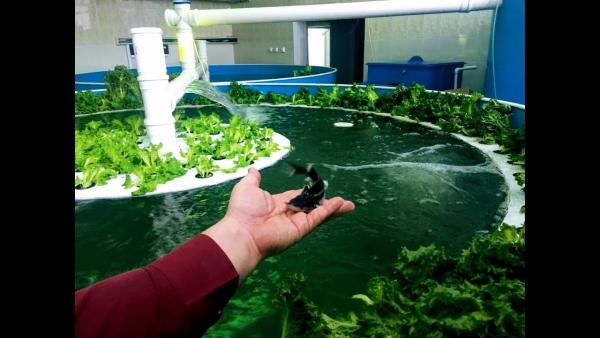 culture aquaponique grande piscine