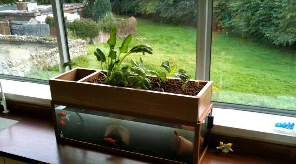 culture aquaponique près de la fenêtre
