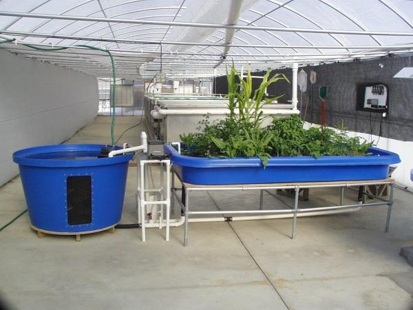 culture aquaponique procès propre