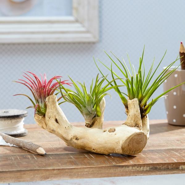 déco de table plante Tillandsia bois