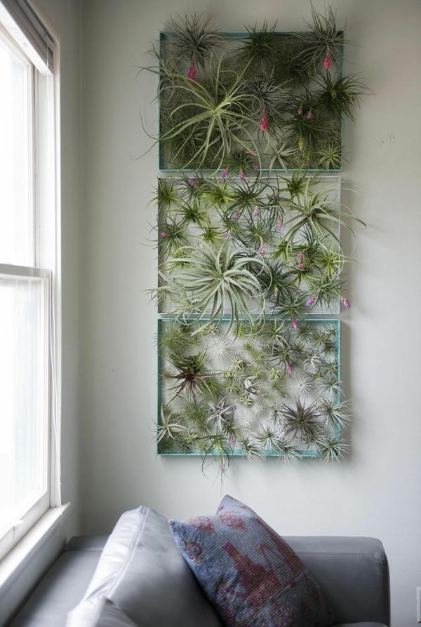 déco murale de salon avec des plantes Tillandsia