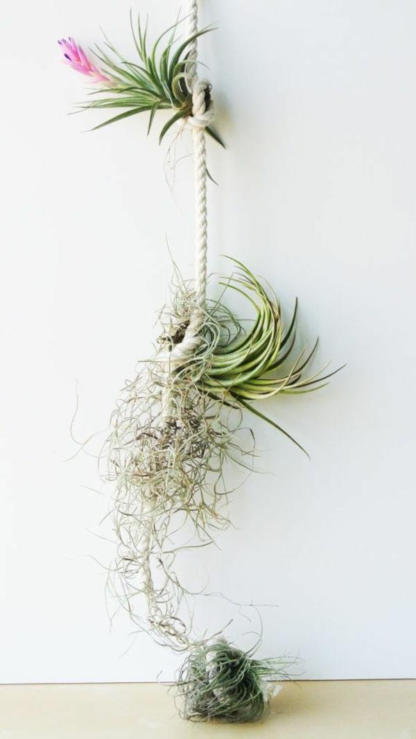 déco murale diy corde et plantes Tillandsia