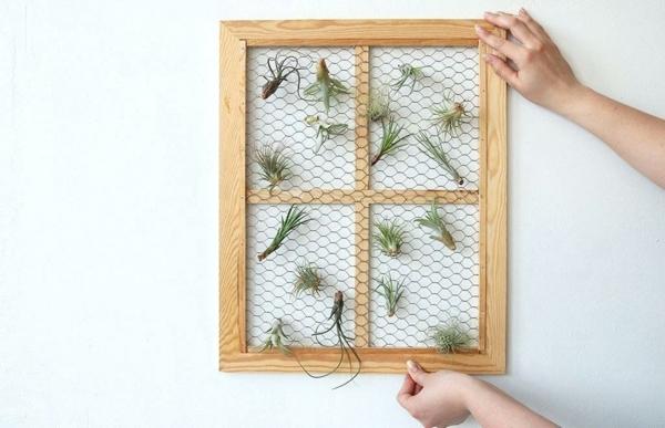 déco murale filet métallique plantes Tillandsia