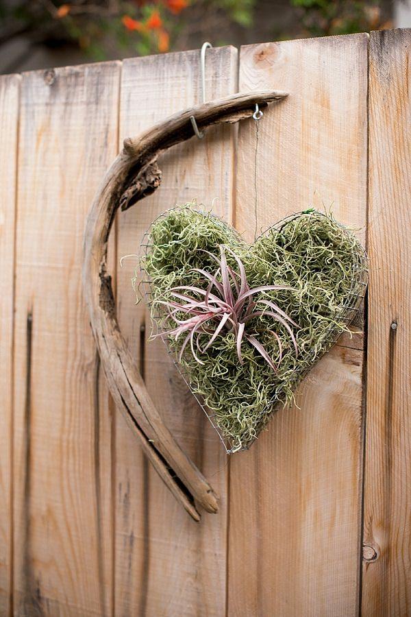 déco murale romantique plante Tillandsia