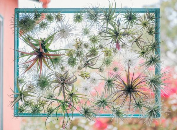 déco plantes Tillandsia cadre métallique