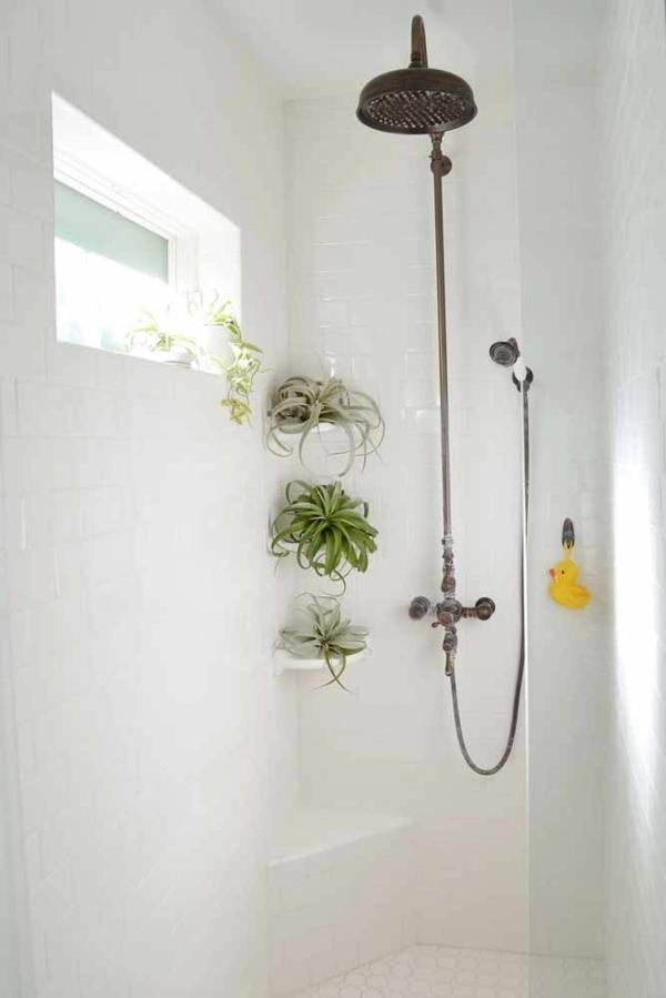 déco salle de bains plantes Tillandsia