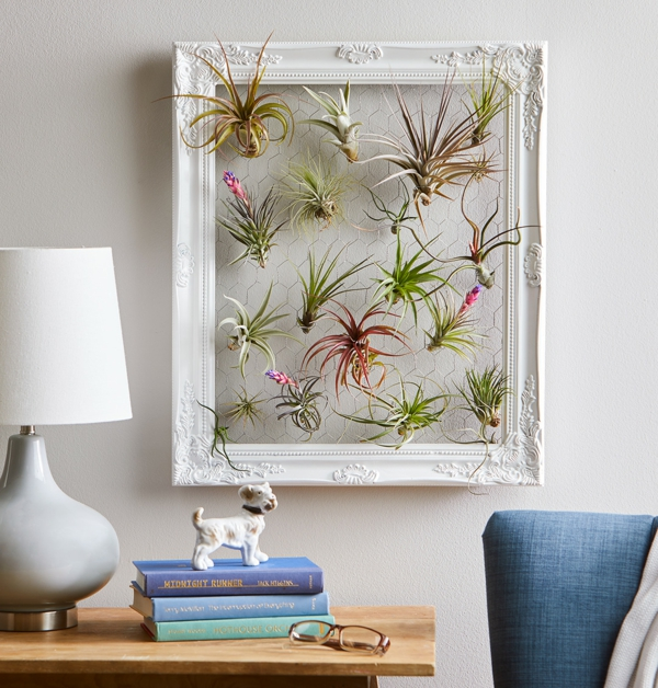 déco salon créative plantes Tillandsia