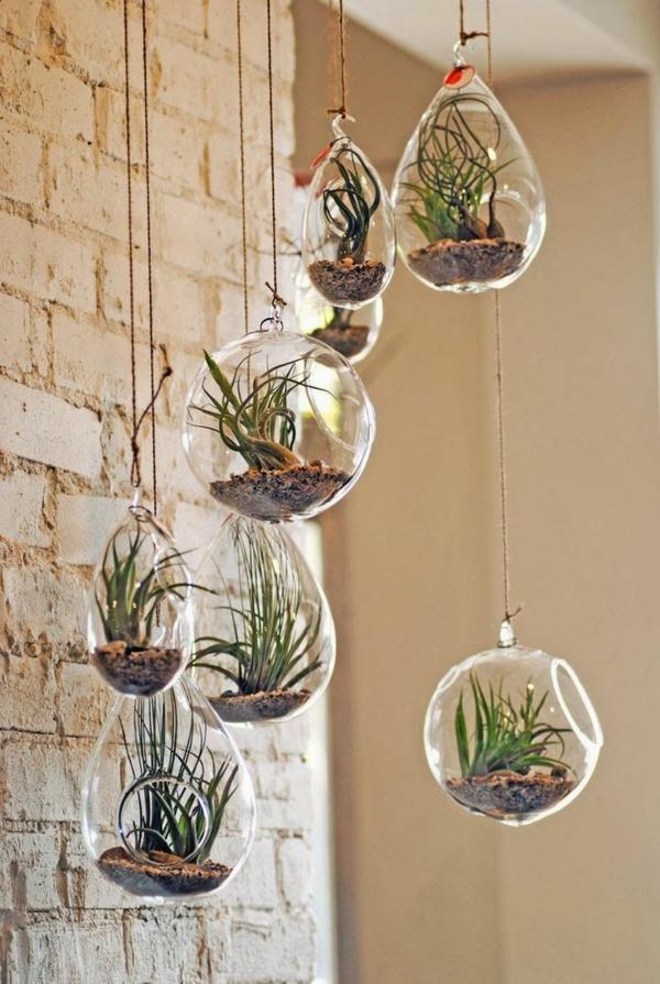 déco terrariums suspendus plantes Tillandsia