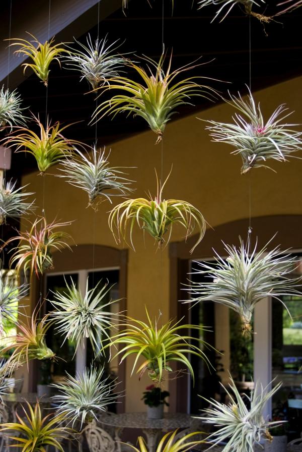 déco terrasse plantes Tillandsia suspendues