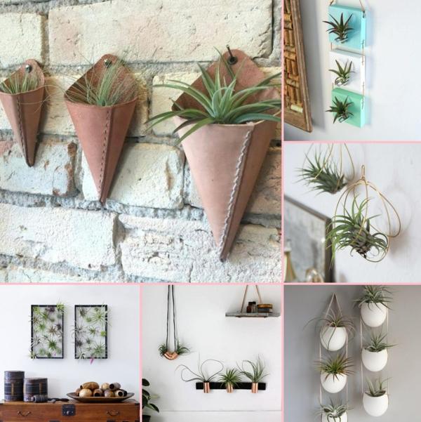 décorer un mur avec des plantes Tillandsia