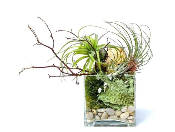 diy décoration avec plante Tillandsia
