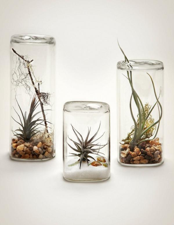 idée déco avec des plantes Tillandsia et récipients en verre