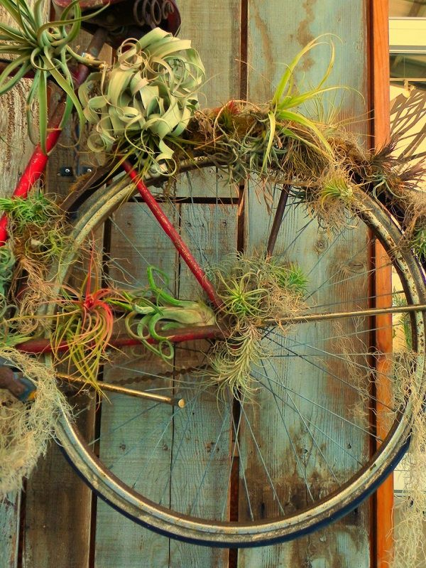 idée déco de jardin plantes Tillandsia objet de récup
