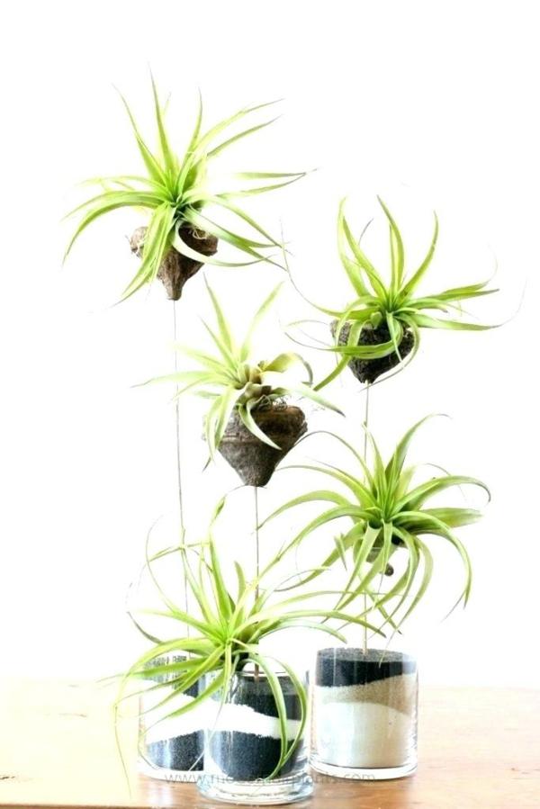 idée déco de table avec des plantes Tillandsia
