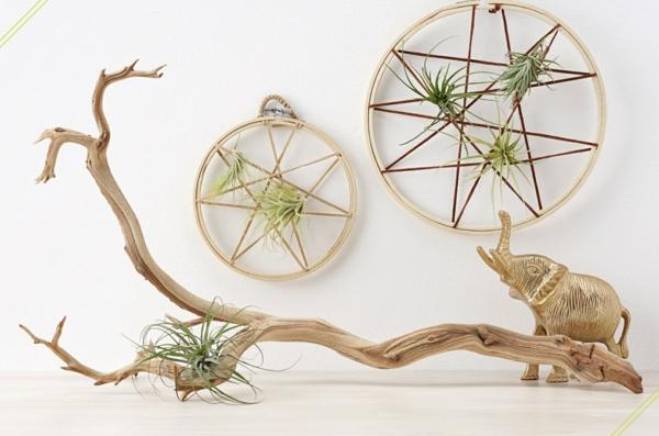 idée déco mur cerceau à broder plante Tillandsia