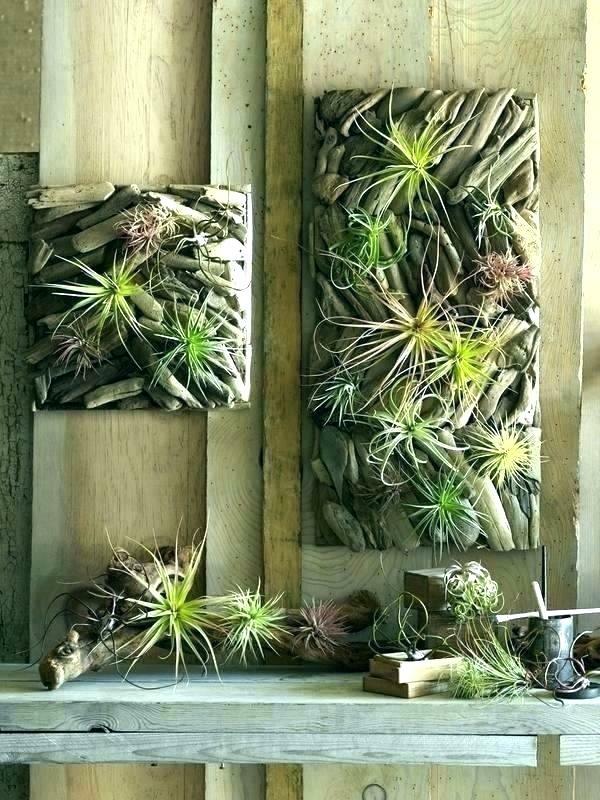 idée déco murale plante Tillandsia bois flotté