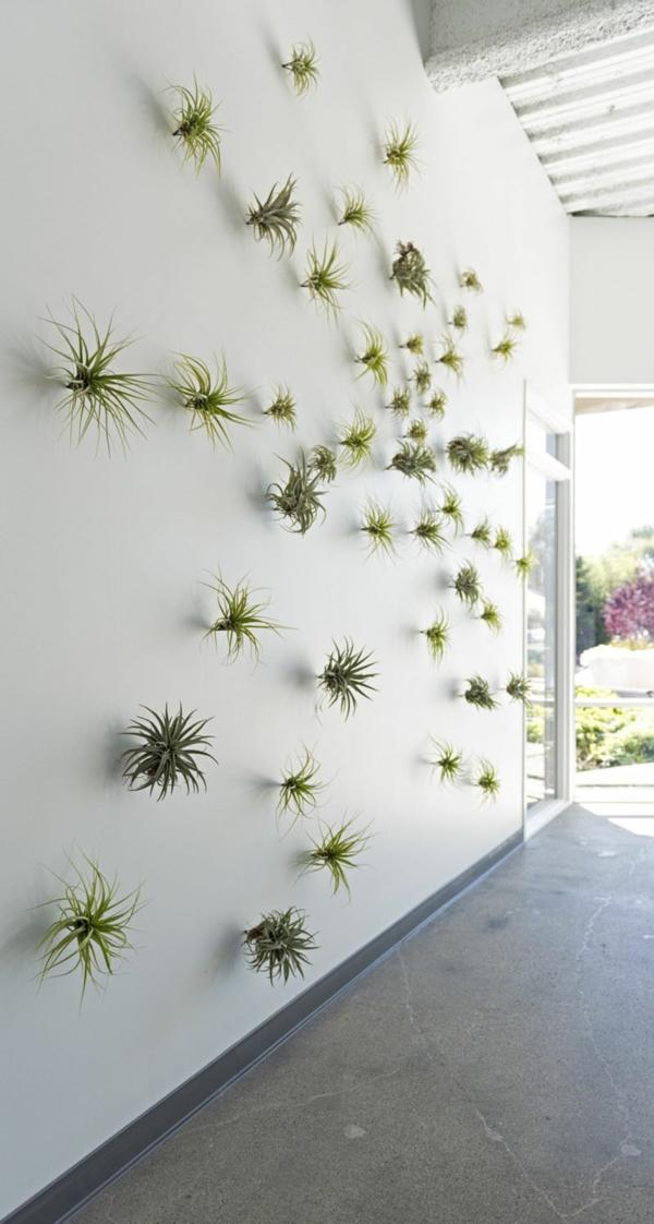 idée déco murale plantes Tillandsia