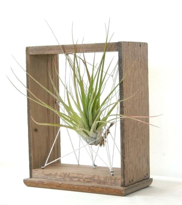 idée déco plante Tillandsia bois corde