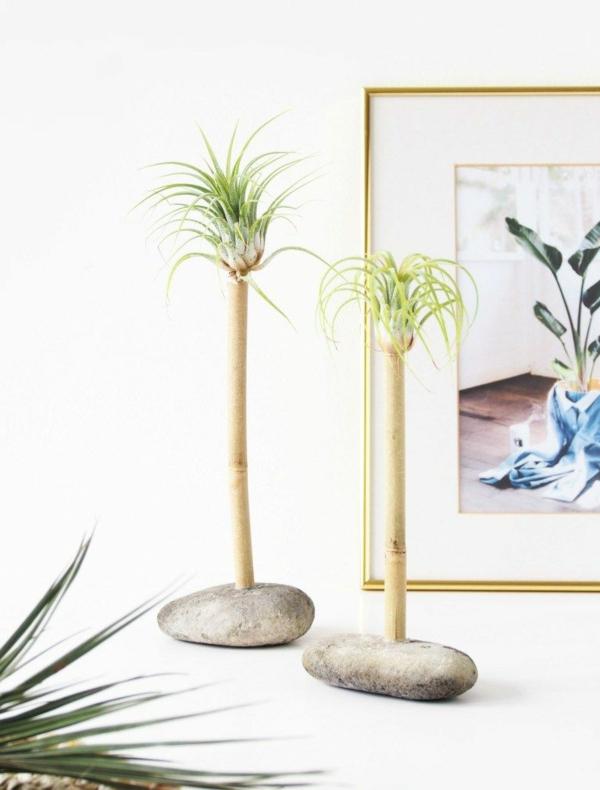 idée déco plantes Tillandsia bambou pierres