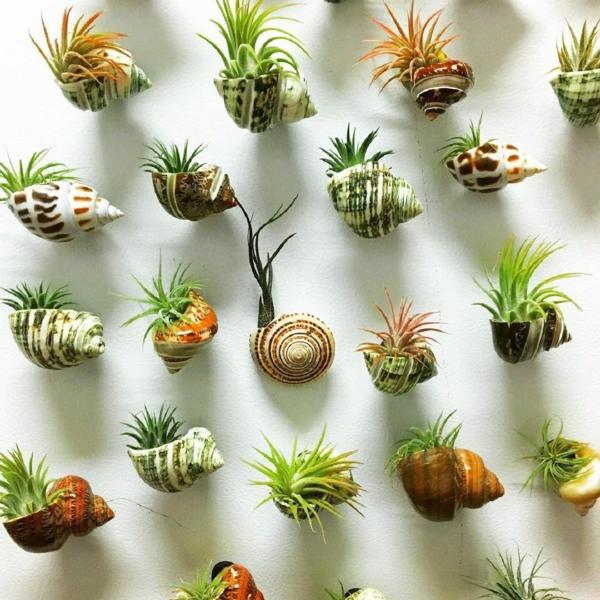 idée déco plantes Tillandsia coquillage