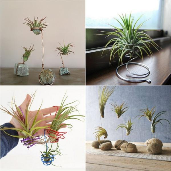idée déco plantes Tillandsia fil métallique