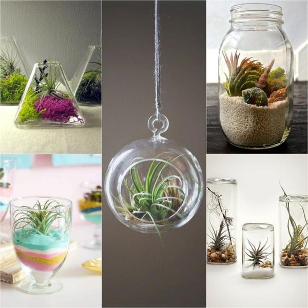 idée déco récipients en verre plantes Tillandsia