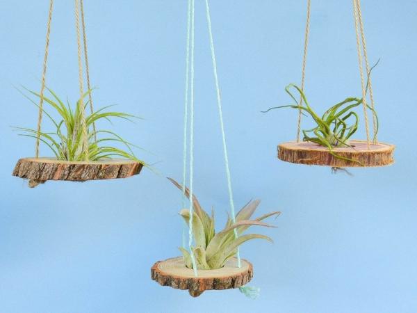 idée jardinière suspendue en bois et corde plante Tillandsia